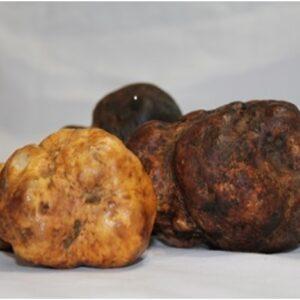 black-truffle-melanosporum